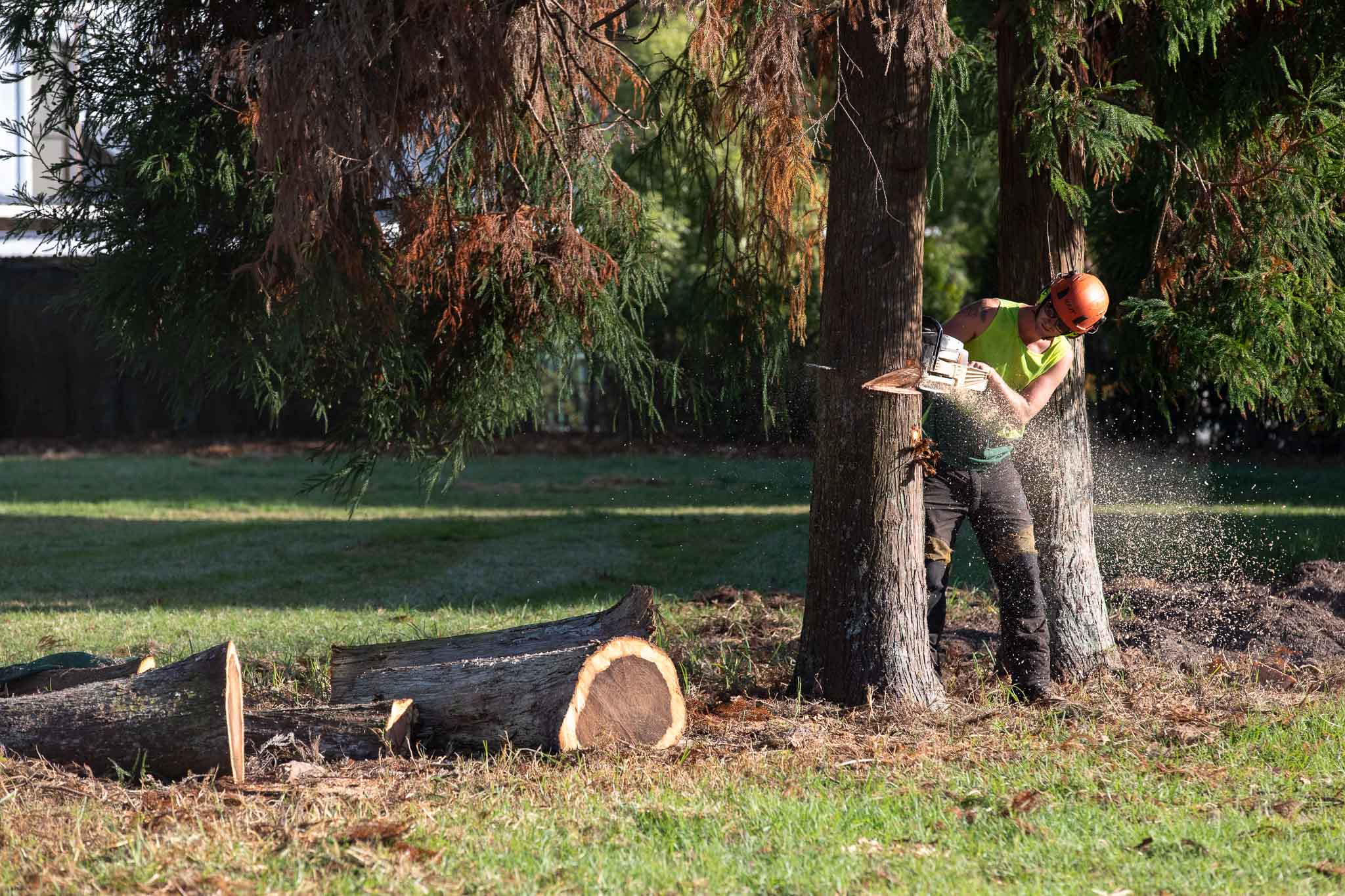 STUMP GRINDER-WEB-5869